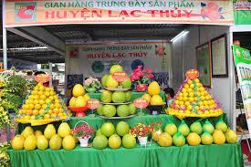 Cay ăn quả có múi Kim Sơn