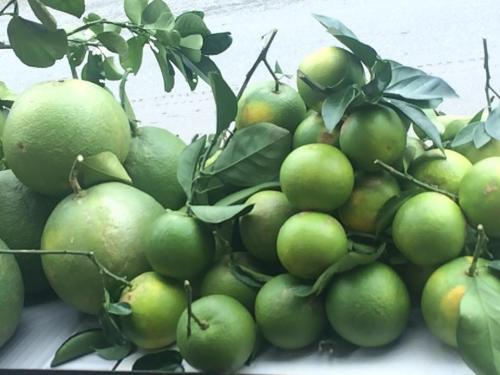 Cây ăn quả Tân mỹ Vietgap