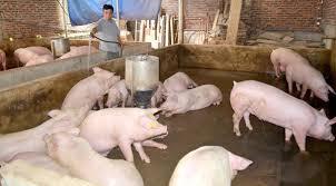 Cơ sở chăn nuôi Trần Thị Ngọc Hạnh