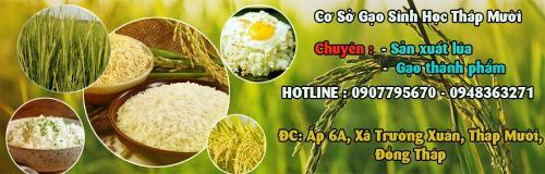 Cơ sở gạo sinh học Tháp Mười