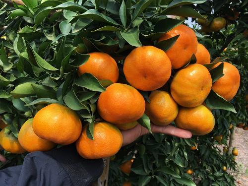 Công ty cổ phần cam sành Hàm Yên