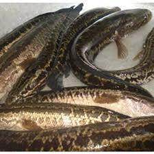 Công ty cổ phần TOH FISH
