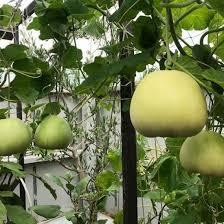 Công ty TNHH Giống cây trồng Kim Hưng Phú