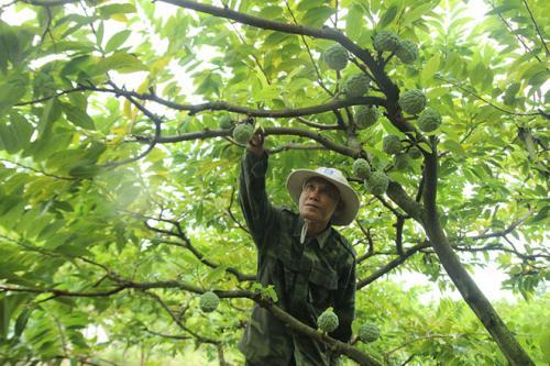 Hợp tác xã dịch vụ nông nghiệp Ba Sao
