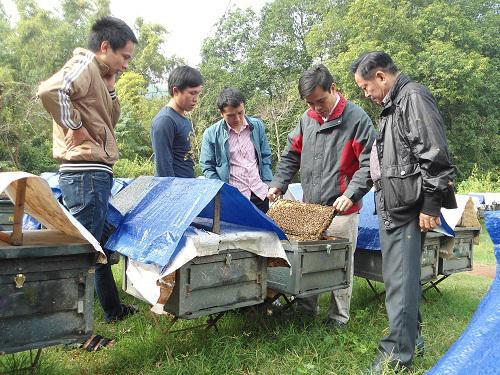 HTX Dịch vụ nông nghiệp Tả Lủng