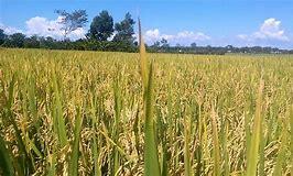 HTX dịch vụ nông nghiệp thôn Gia Phú