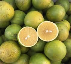 HTX Cam và cây ăn quả có múi Hương Minh