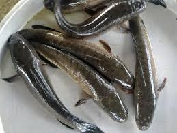 Tổ hợp tác chăn nuôi thủy sản tổ 10 ấp Hòa Thành