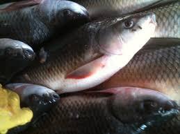 Tổ hợp tác nuôi trồng thủy sản ấp Bưng Cần
